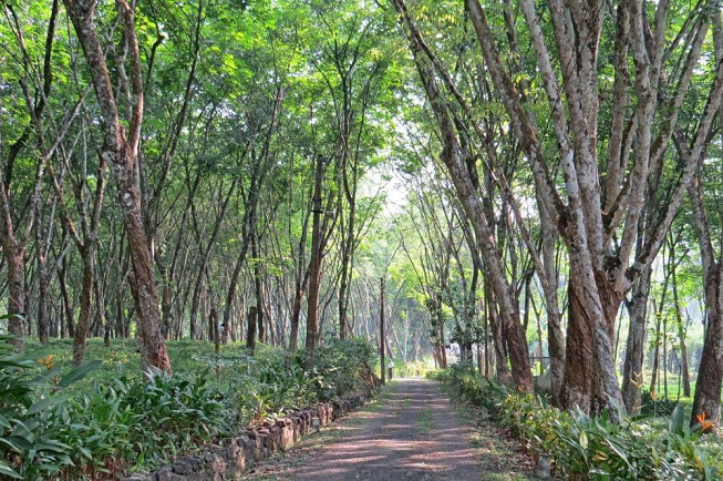 Featured image of top 30 yoga retreats for November 2017 with country-style view of Thudugala Road at 14 Day Weight Loss & Yoga Retreat in Nature, Sri Lanka