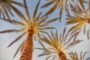 Palm Trees of Southern California for yoga retreats this year